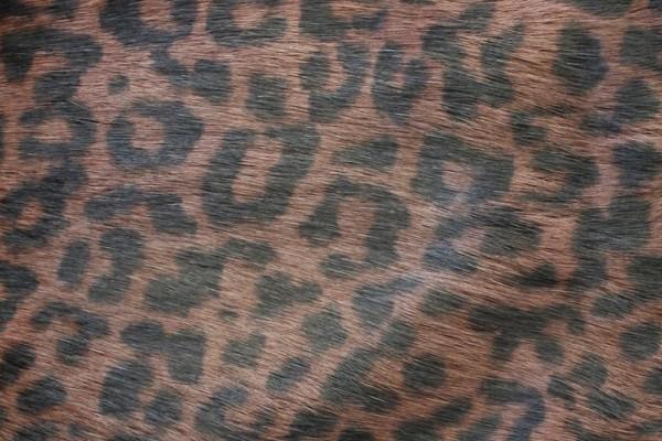 Rugi Cougar LH