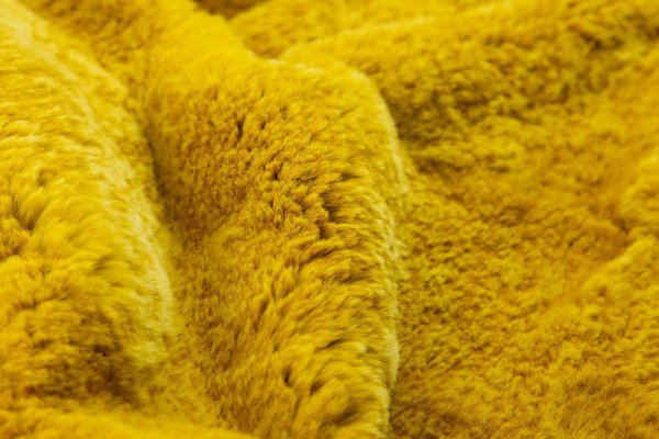 B. Rex Mielsol Late LS.Wool